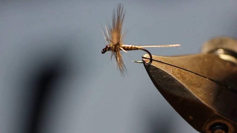 Mouche a ailes