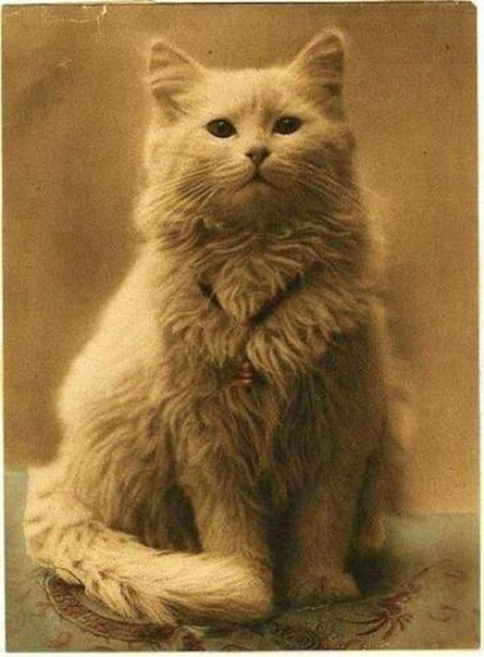 Первая фотография кота в мире