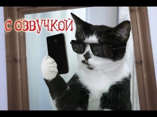 Смешные коты с ОЗВУЧКОЙ от Domi Show Лучшие приколы МЕМЫ
