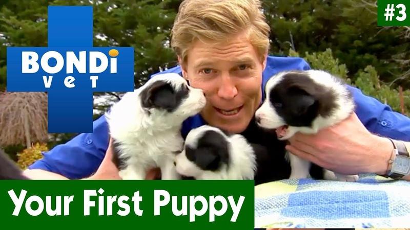 Твой первый щенок. Эпизод 3 / Your First Puppy With Dr Chris Brown | EP03