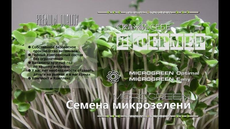 Насіння мікрозелені купити 0965647296 0509299615 MICROGREEN© НасінняМікрозелені
