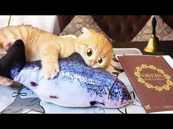 Breakfast kitten foxy cat vs fake fish