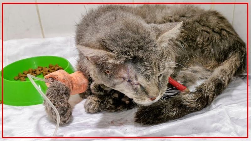 Спасение кота Матиз пострадавшего по вине человека animal shelter saves a stray cat