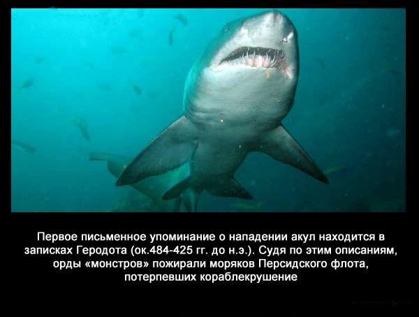Valteya - Интересные факты о акулах / Хищники морей.(Видео. Фото) - Страница 2 1QKPPENDNp0