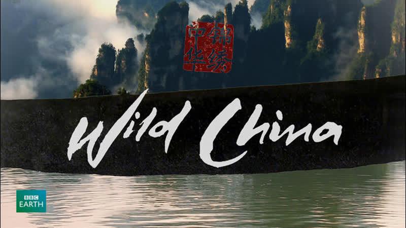 BBC Дикий Китай 5 серия Земля панды