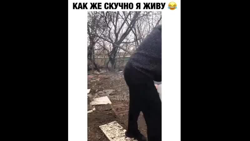 Video__like__ruBwUB3OsHHIx.mp4