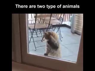 Существует два типа животных...