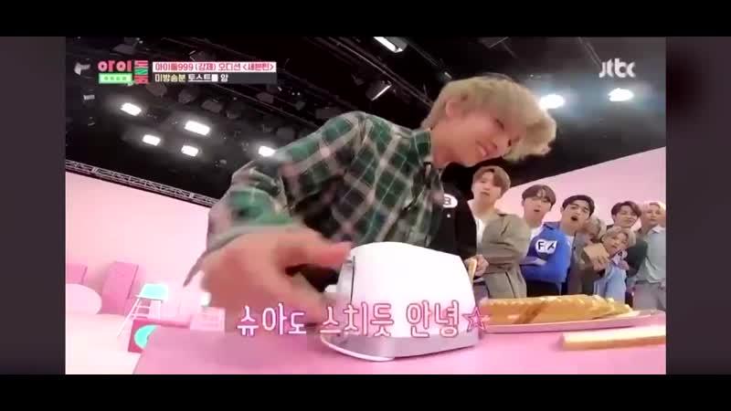 Shua vs toster