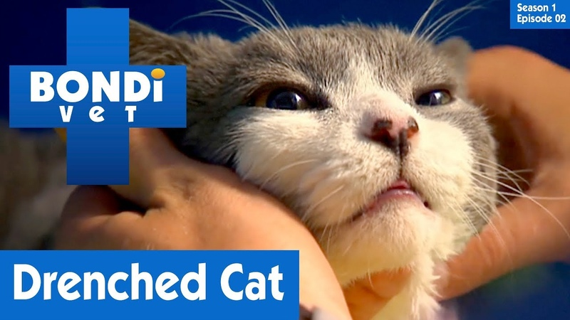 Ветеринар Бондай Бич Одинокий кот в Бондай Бич (1 сезон 2 серия) Cat Left In Bondi Beach | S01E02 | Bondi Vet