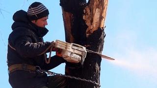 Аварийный спил деревьев, опасно для жизни! Просьба не повторять!
