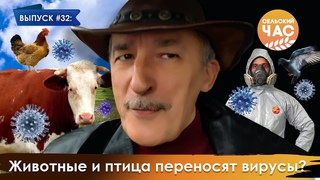 Животные и птица переносят вирусы? Сельский час #32 (Игорь Абакумов)