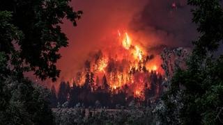 Аномальная жара, горит торфяник на площади 85 гектаров на юге Беларуси