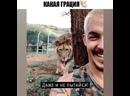 Охота льва на человека