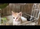 Видео от Елены Воиновой
