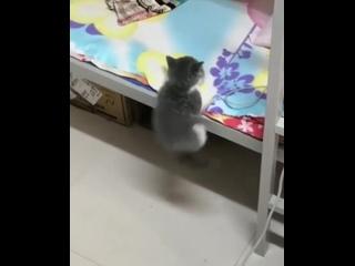 котенок пытается