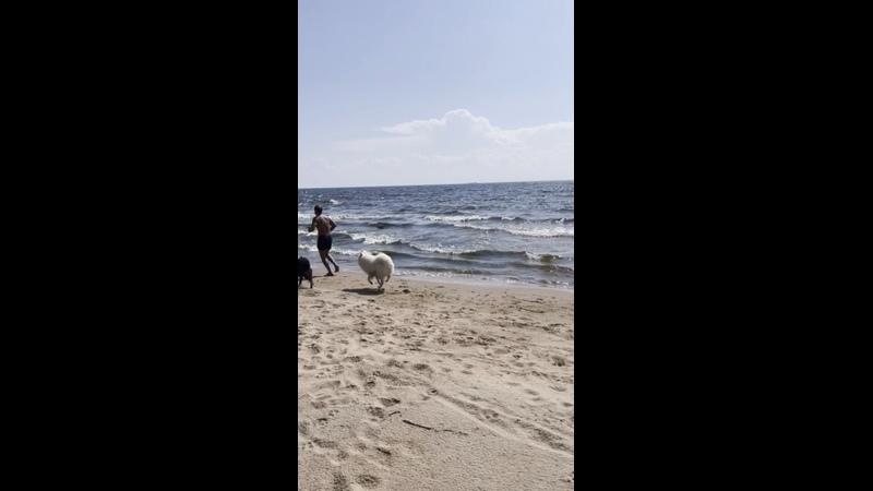 Видео от Хаски центр БЕЛЫЙ ВЕТЕР