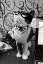 Фотоальбом Cat Next
