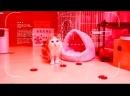 КОГДА ХОЧЕШЬ СПАТЬ Супер классные смешные приколы на ютубе 2017 лучшие видео до слез