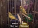 Фотоальбом Артёма Приходько