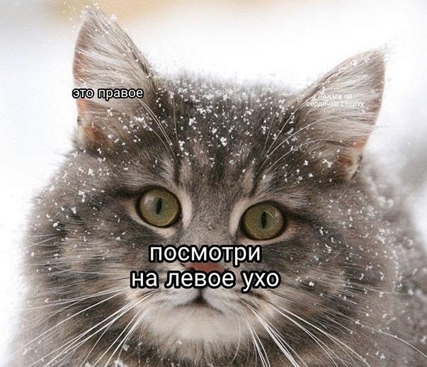 Милый котик хочет ваших лайков