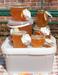 Отдам среднерусский мёд в хорошие руки., image #10