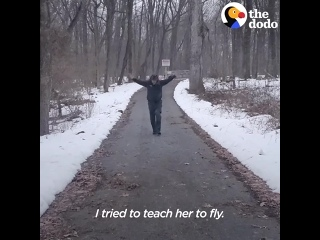 парень учит своего спасенного гусенка летать