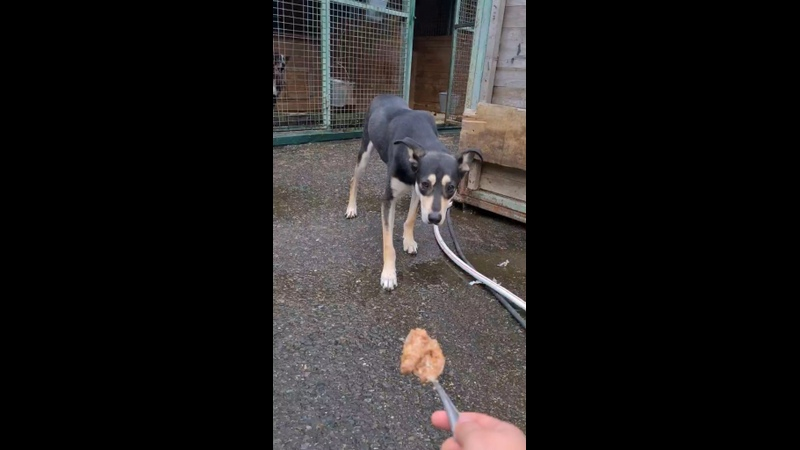 Видео от Dogsbery