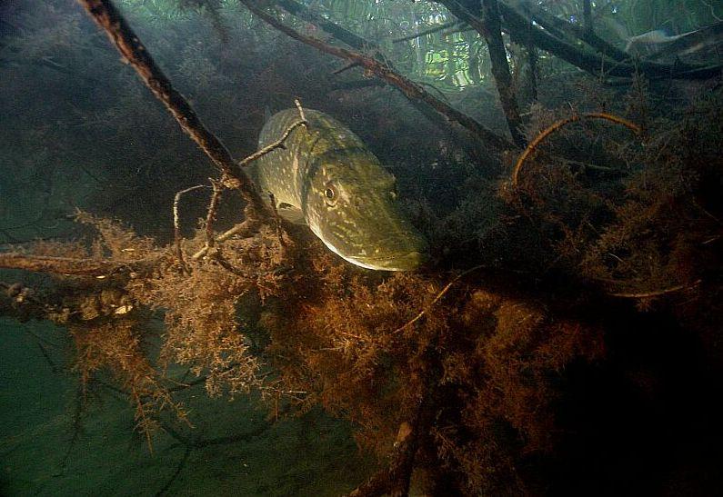 Как поймать хищника на мелководье, изображение №2