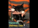 котята Пузанчики ищут дом. Приют Петербург