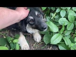Видео от Бездомные животные Сызрани. Поможем вместе!