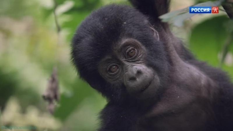 BBC Малыши в дикой природе Первый год на Земле 2 Учёба Познавательный животные 2019