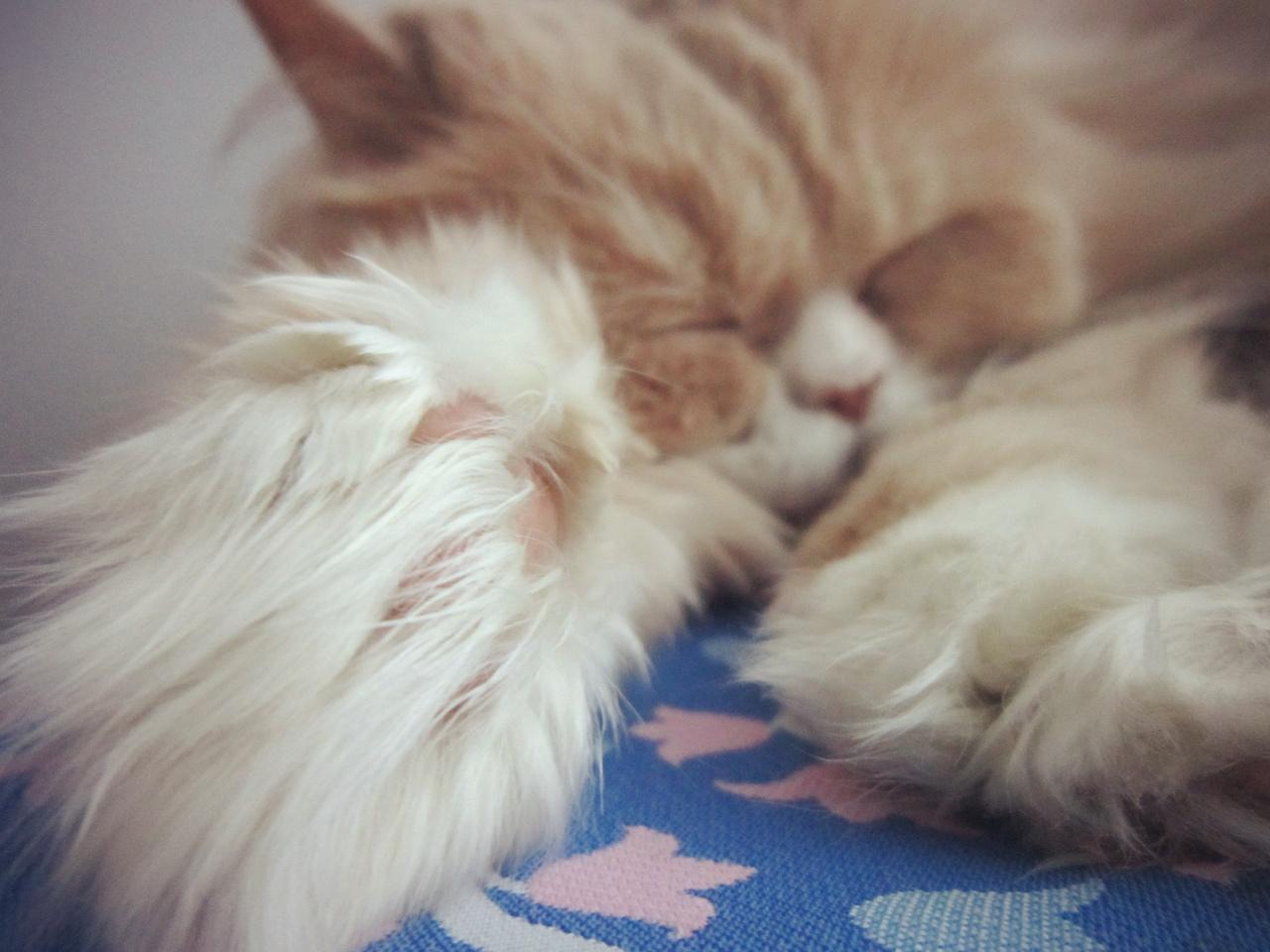 фото из альбома Kitty Yo №10