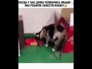 завели кошку, когда появились мыши в доме