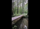 Лесной болван
