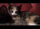 Котята ищут дом и хозяев