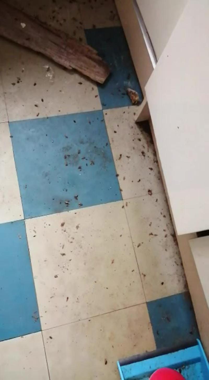 Уничтожение тараканов в Санкт Петербурге