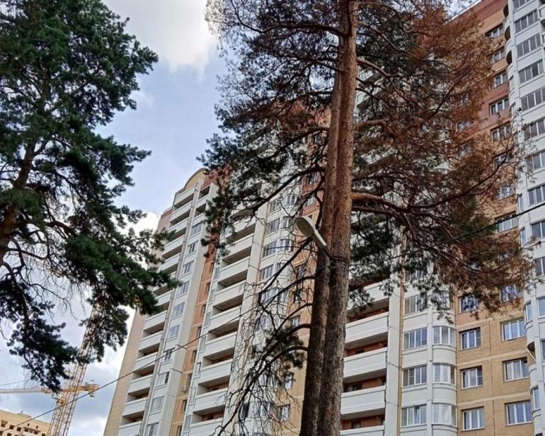 В Дмитрове жители просят снять с сосен светильники
