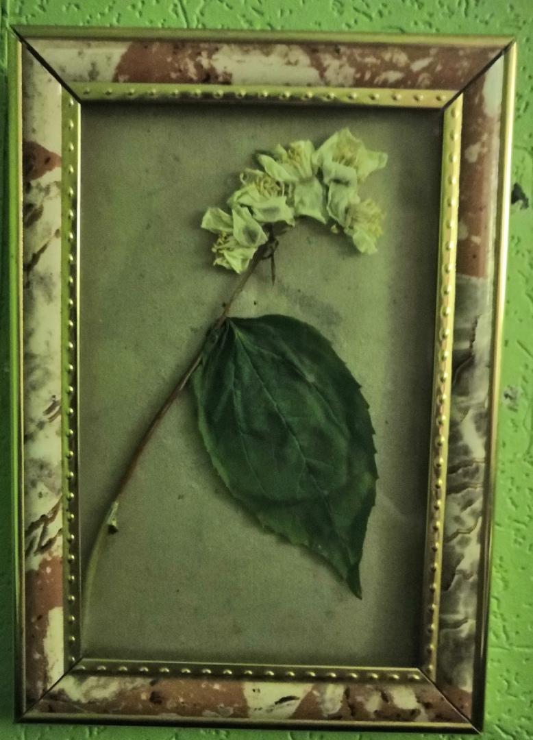 фото из альбома Миши Бортновского №9