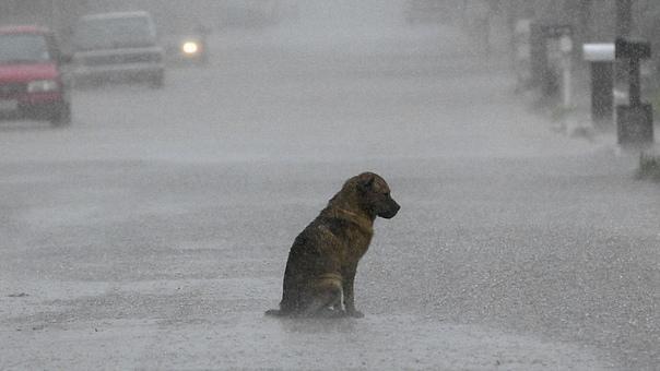 ❗В Омской области отловят бродячих собак после нап...