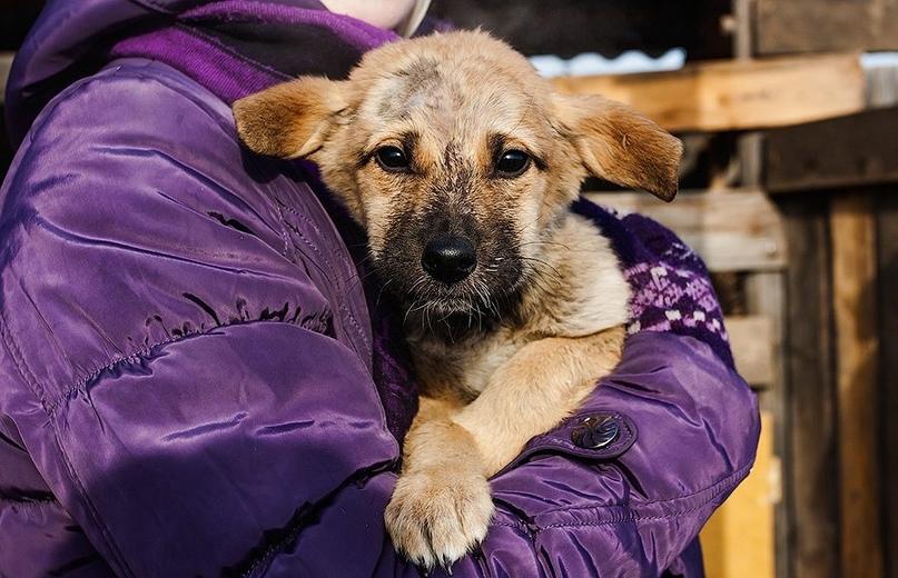 Муниципалитеты оказались не готовы взять ответственность за отлов бездомных собак