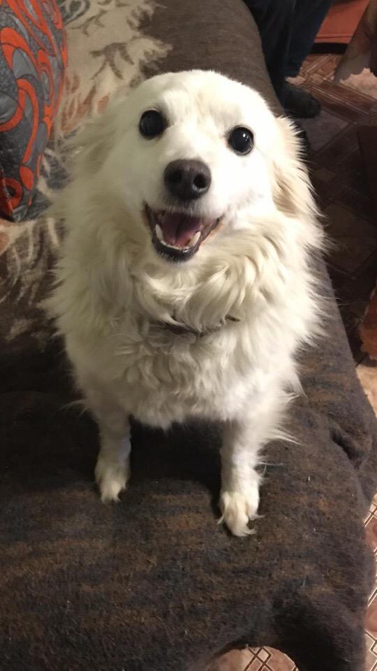 Потерялась собачка, зовут ЛЯЛЯ, потерялась в посёлке
