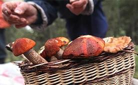 В Минприроды опровергли сообщения об ужесточении правил сбора грибов и ягод
