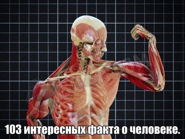 103 интepecных фaктa o чeлoвeкe