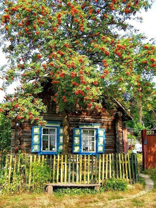 Супружеская пара снимет дом в | Объявления Орска и Новотроицка №18340