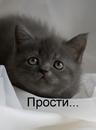 Вельгорский Вадим   Новосибирск   44