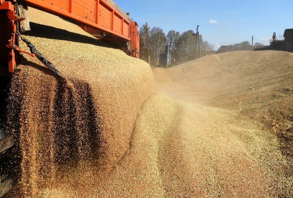 Все нюансы перевозки пшеницы автотранспортом