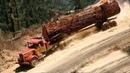 чрезвычайно опасно Вывозка леса в Бразилия Когда едет только трактор или лесовоз