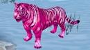 Симулятор Семьи Белого Тигра 2 Розовый тигренок Кида и Новые Уровни в Симе дикой кошки на Пурумчата