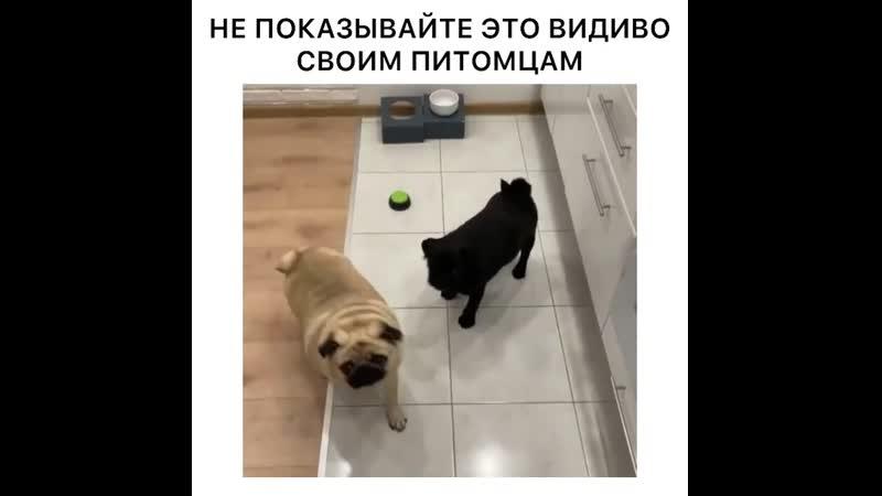 ВОЛШЕБНИК 80ЛВЛ