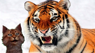 Наука для детей Животные   Тигр   Хищные животные